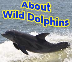 Gulf Shores dolphin cruises tripadvisor