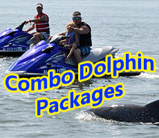 dolphin tours orange beach tripadvisor