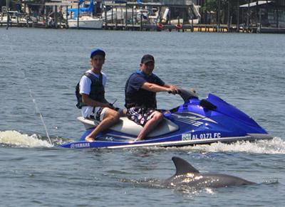 Dolphin Waverunner
