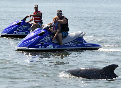 Waverunner Dolphin Tours